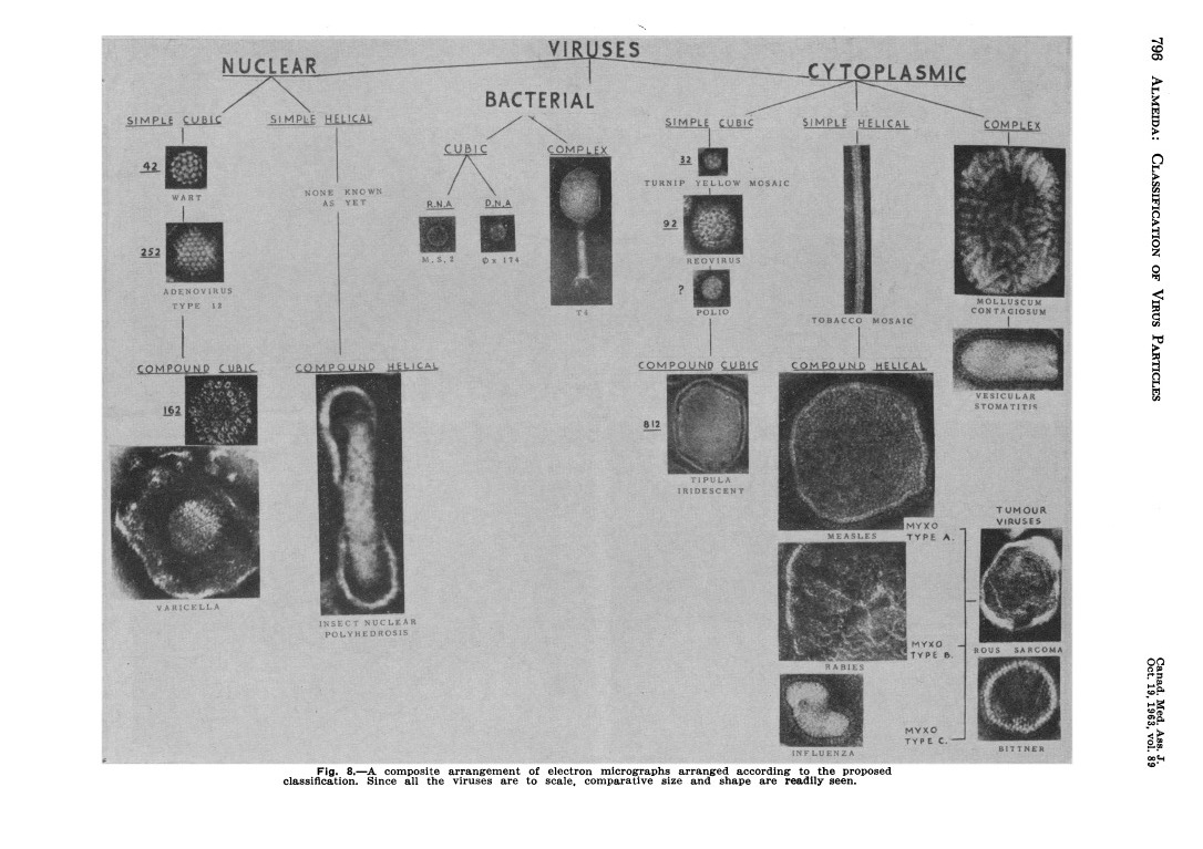 Classification scheme with electron micrograph images