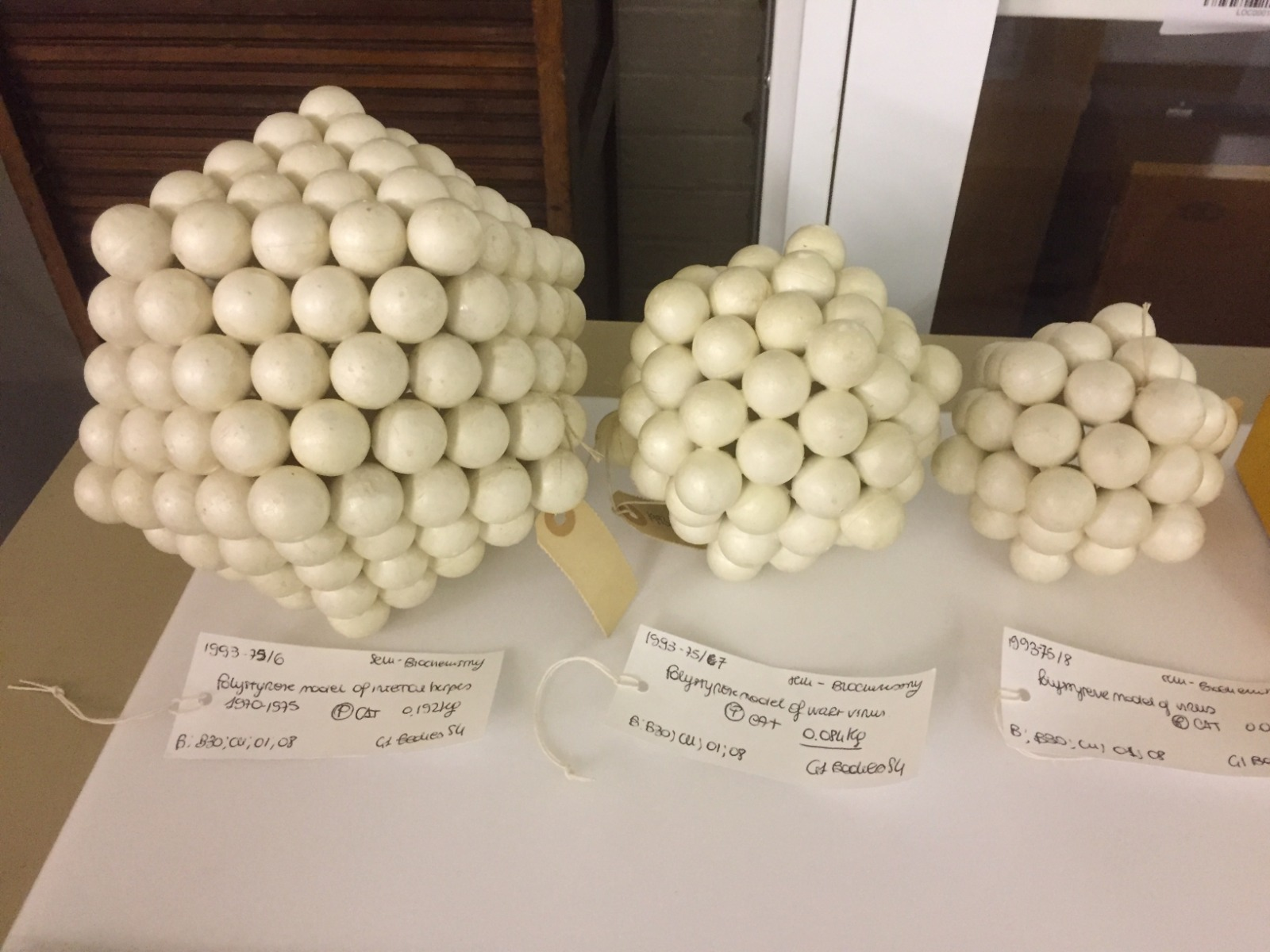 Photograph of the virus models Almeida built out of polystyrene for teaching purposes