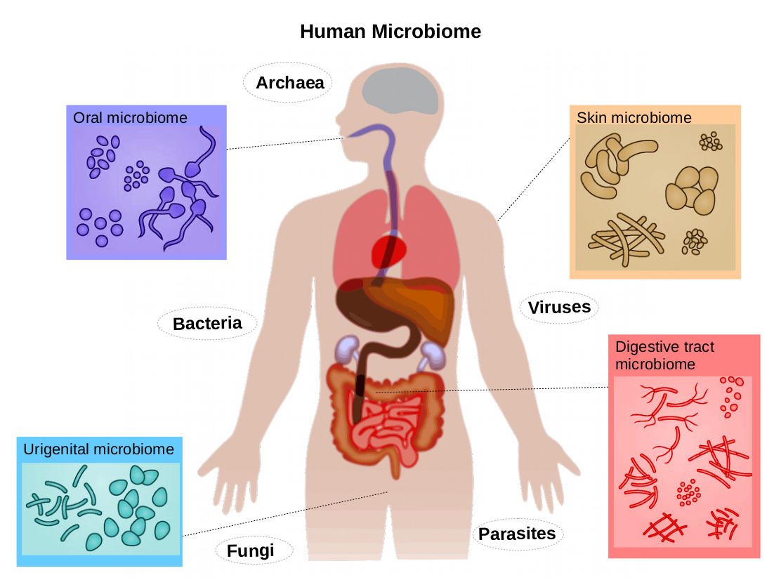 The human microbiome | Summary
